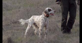 Heeling in the field