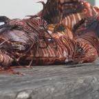 Belize Boys' Trip: Lionfish Ceviche