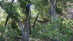 Hanging the Backyard Tree Stand