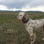 Road Trip – Dry Fork Road, MT